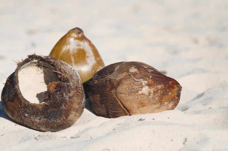Coconuts on sand royalty free stock images