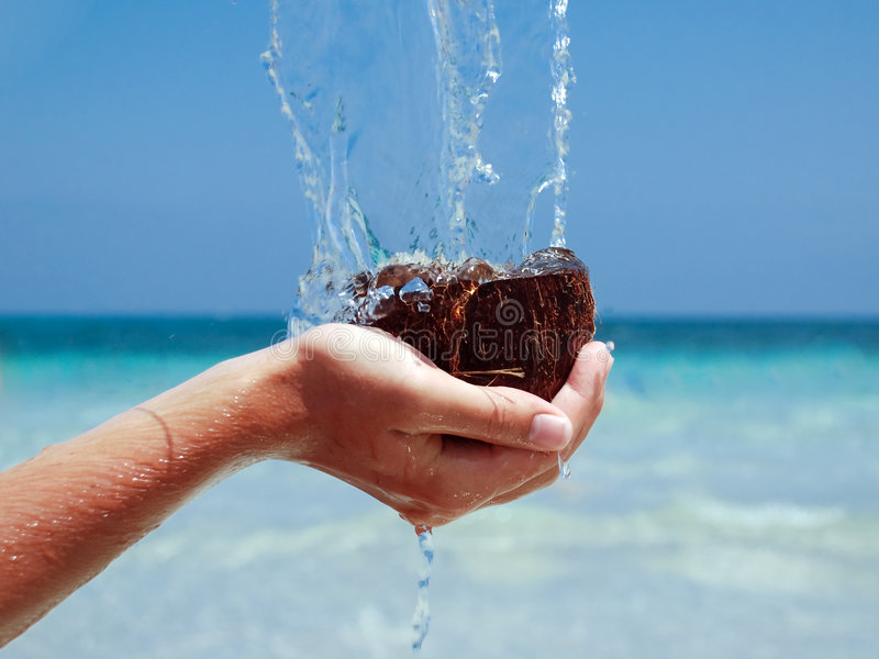 Download Coconuts In Sea Stock Photography - Image: 2855782
