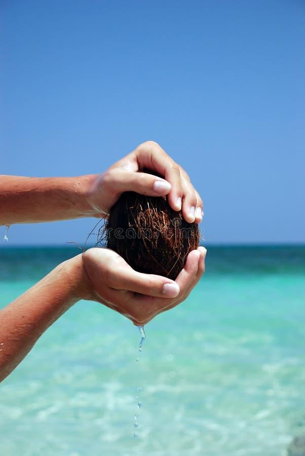 Coconuts In Sea Stock Photo