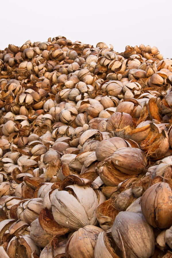 Download Coconuts shells stock image. Image of shell, outer, hard - 19675587