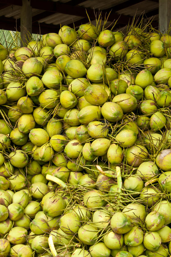 Coconuts In Storage Stock Image