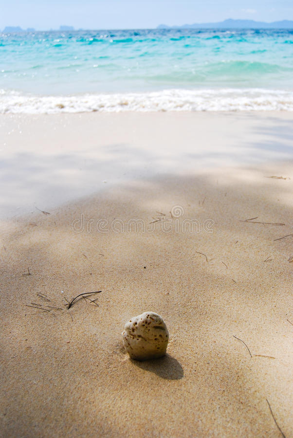 Download Coconuts to the sea. stock image. Image of thai, fruit - 18382727