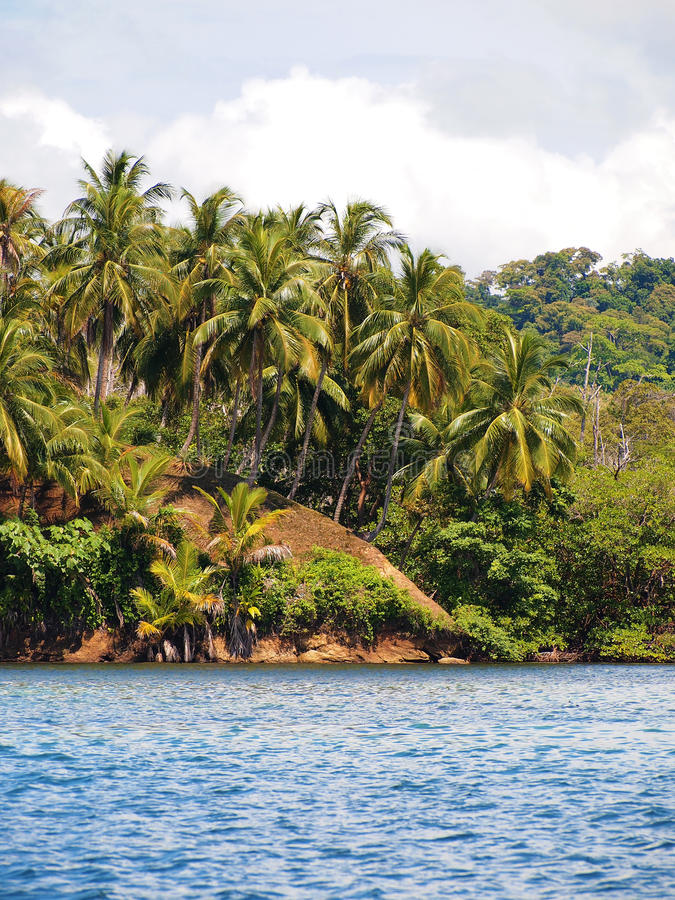 Download Coconuts tree hill stock photo. Image of caribbean, vacation - 20728132