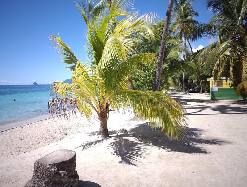 Coconuts trees best beach withe sand stock photo