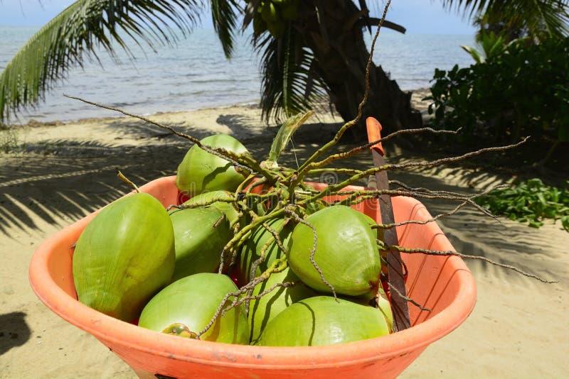 Coconuts in a wheelbarrow stock photo