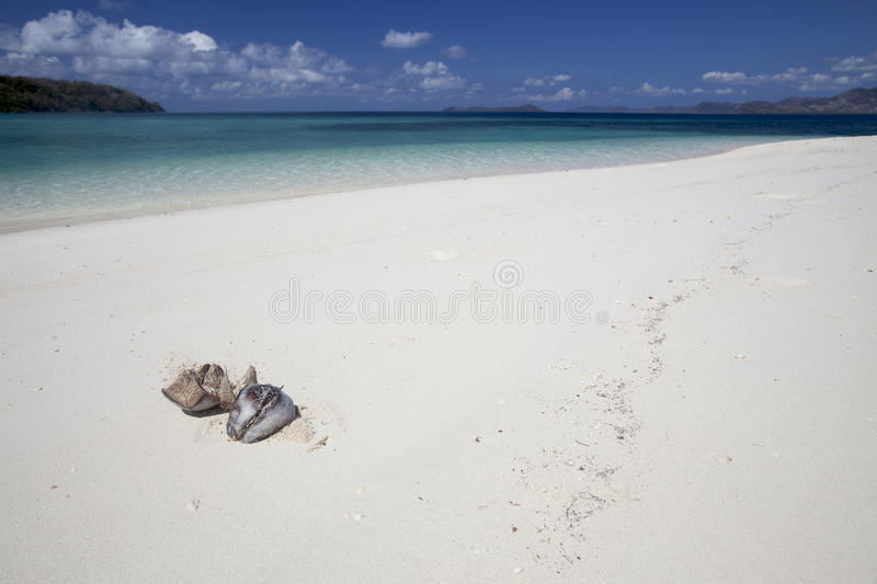 Download Coconuts on white beach stock photo. Image of blue, isolated - 16144296