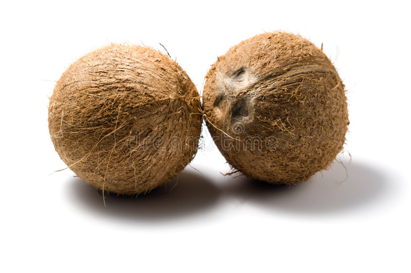 Download Coconuts whole stock image. Image of coconut, tropical - 3727267
