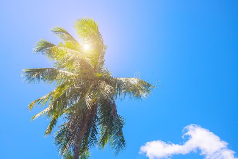 Cocopalmträdöverkant med solsignalljuset Palmträdkrona med det gröna bladet på solig himmelbakgrund royaltyfri bild