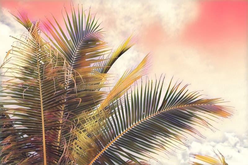 Cocopalmträdkrona på himmelbakgrund Rosa färger tonad palmblad på solnedgånghimmel Digital illustration för tropisk semester arkivfoto