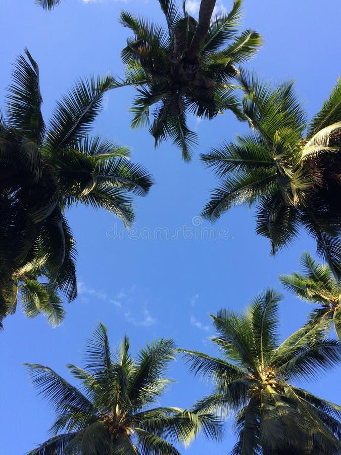 Cocoparadise 免版税库存照片
