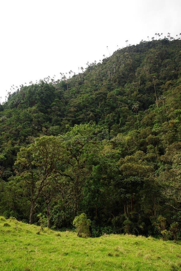 Cocora谷看法在Salento,哥伦比亚 库存照片