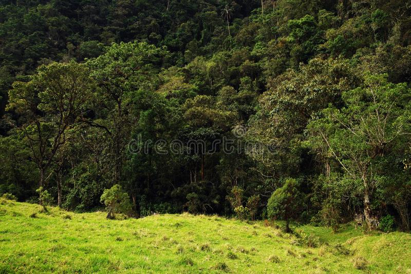 Cocora谷看法在Salento,哥伦比亚 库存图片