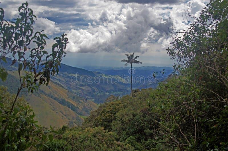 Cocora dal nära Salento, Colombia arkivbild