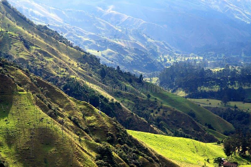 Cocora dalnationalpark arkivbild