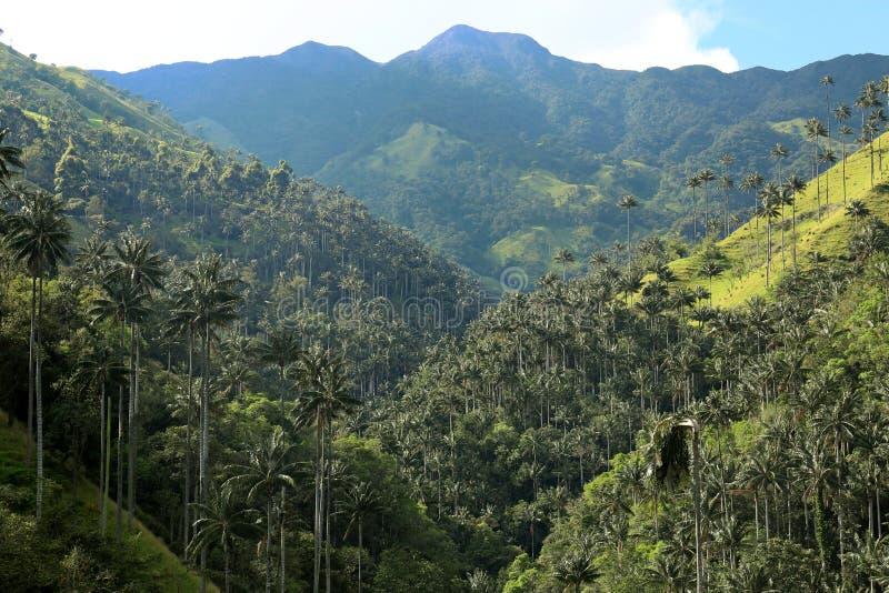 Cocora-Tal eine bezaubernde Landschaft ragte vorbei durch die berühmten riesigen Wachspalmen hoch Salento, Kolumbien stockfotografie