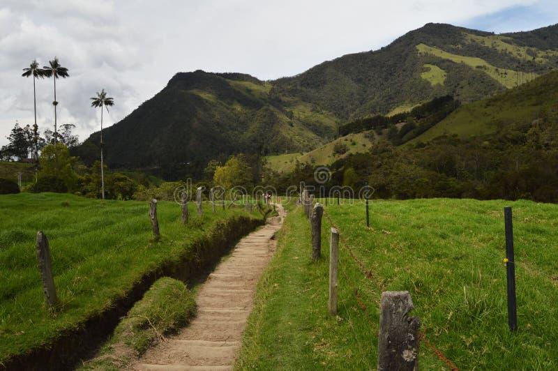 In Cocora-Tal wandern, Kolumbien stockbilder