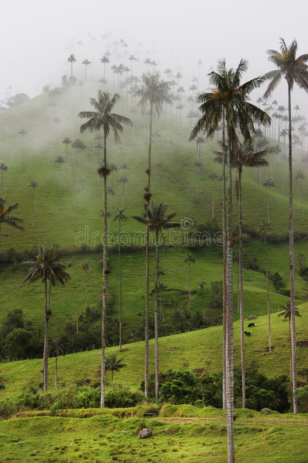 Cocora Valley stock images