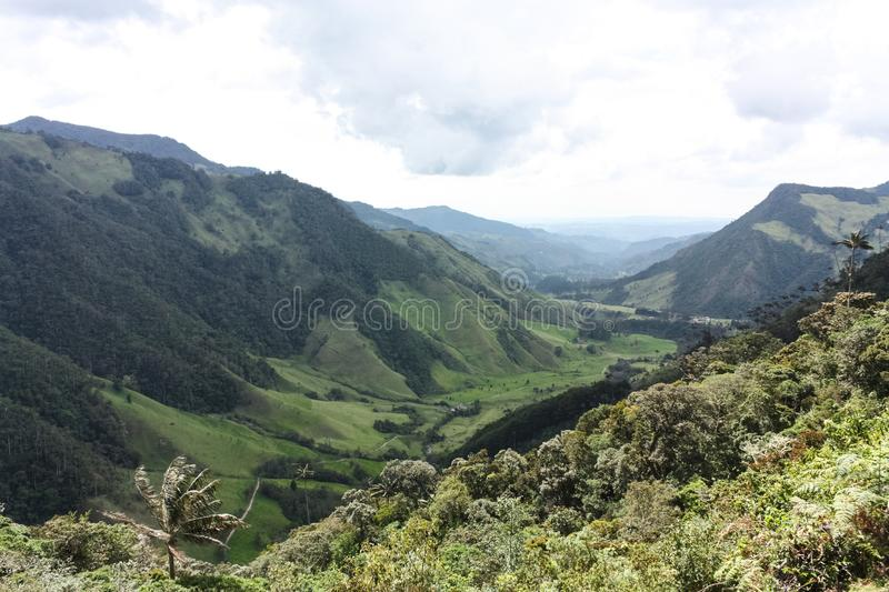 Cocora Valley, which is nestled between the mountains of the Cordillera Central in Colombia. Predominates in the majestic surroundings of Quindio wax palm royalty free stock photo
