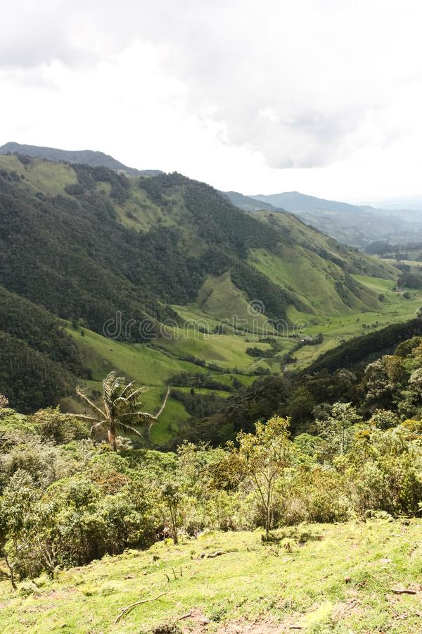 Cocora Valley, which is nestled between the mountains of the Cordillera Central in Colombia. Predominates in the majestic surroundings of Quindio wax palm stock photography