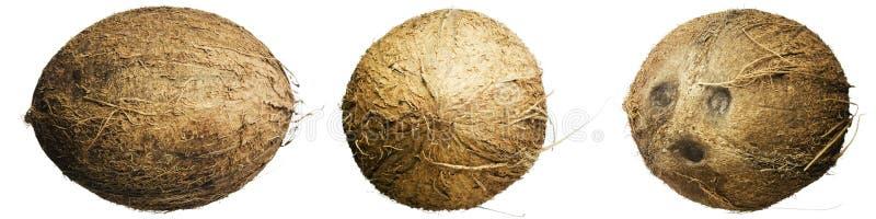 cocos royaltyfri fotografi