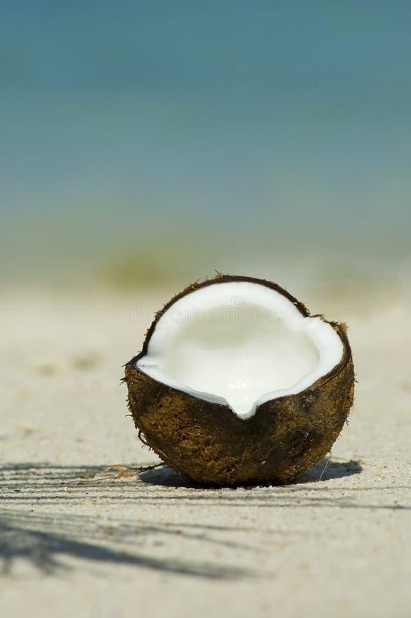 Cocos image libre de droits