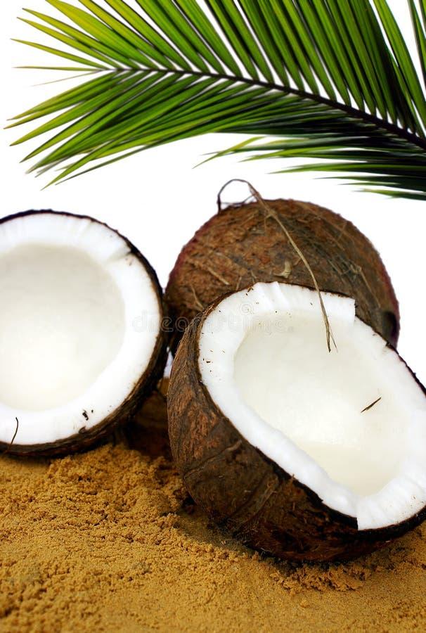 Cocos lizenzfreie stockfotos