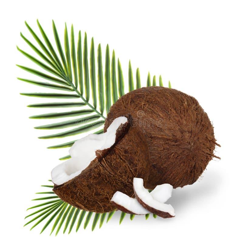 Cocos agrietados en el fondo blanco foto de archivo libre de regalías