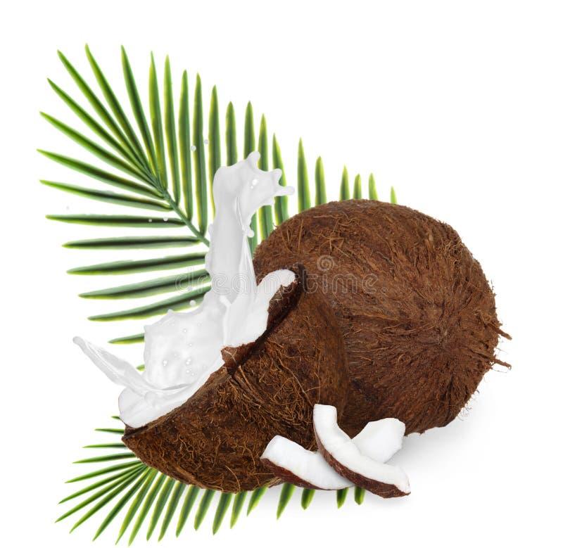 Cocos agrietados en el fondo blanco imágenes de archivo libres de regalías