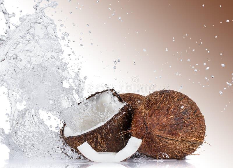 Cocos agrietados en el fondo blanco imagen de archivo