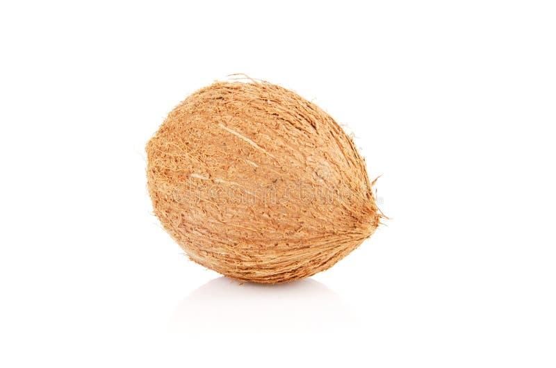 Cocos aislados en el fondo blanco fotos de archivo libres de regalías
