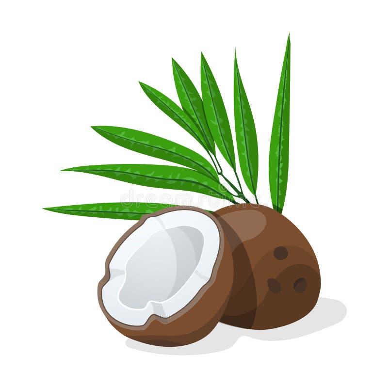 Cocos com folhas Ilustração do vetor ilustração stock