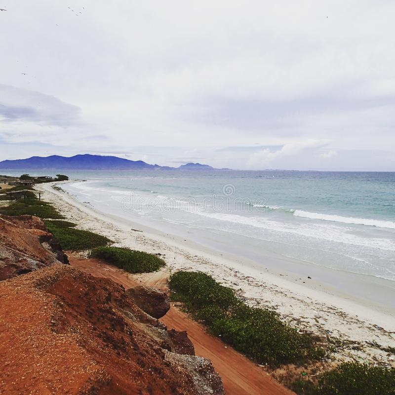Cocos d'EL de Playa image libre de droits