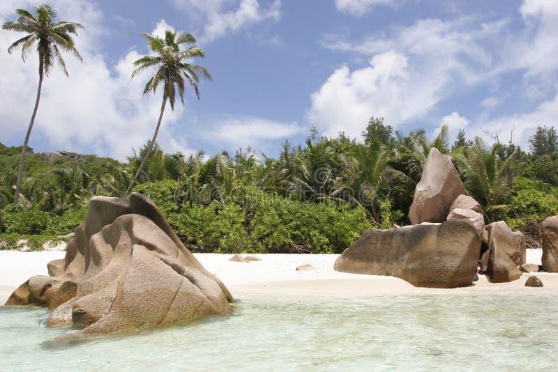 Cocos de Anse imagen de archivo