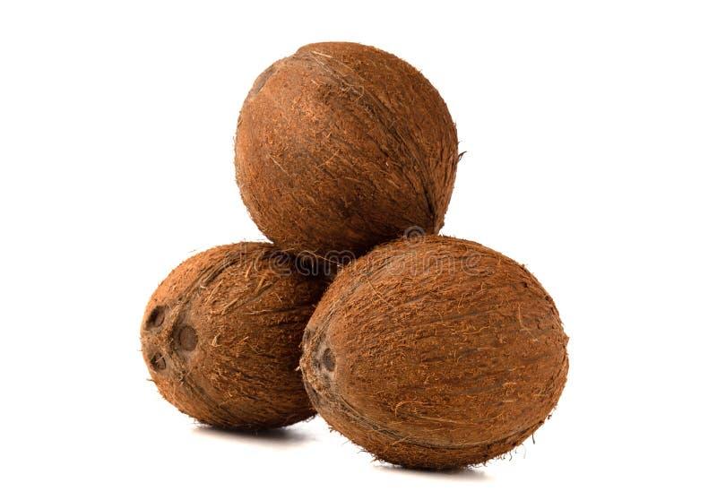 Cocos em um fundo branco imagens de stock