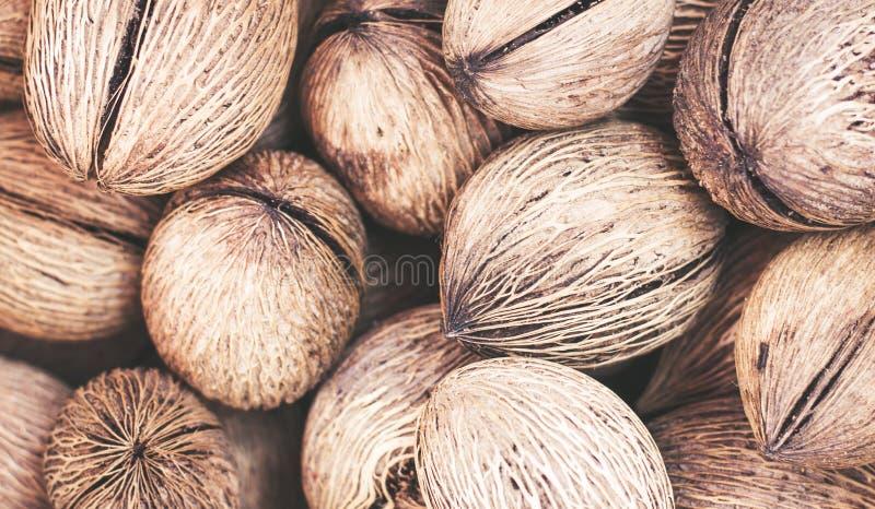 cocos Exocarpo-pelados en el cierre del cubo para arriba foto de archivo libre de regalías