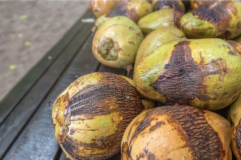 Cocos frescos da ?rvore fotografia de stock royalty free