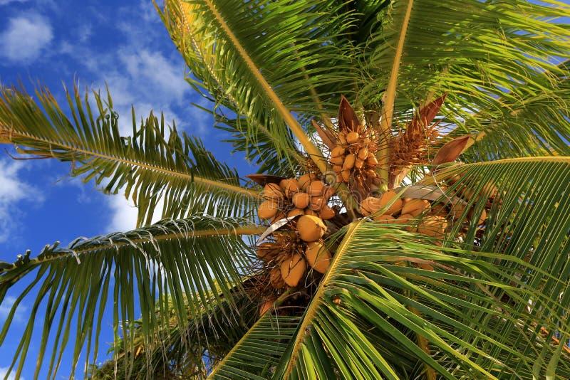 Cocos, Ilhas Christmas, Kiribati fotografia de stock royalty free
