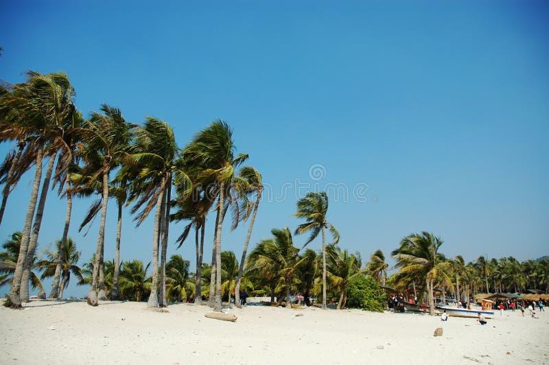 Cocos im Wind stockbilder