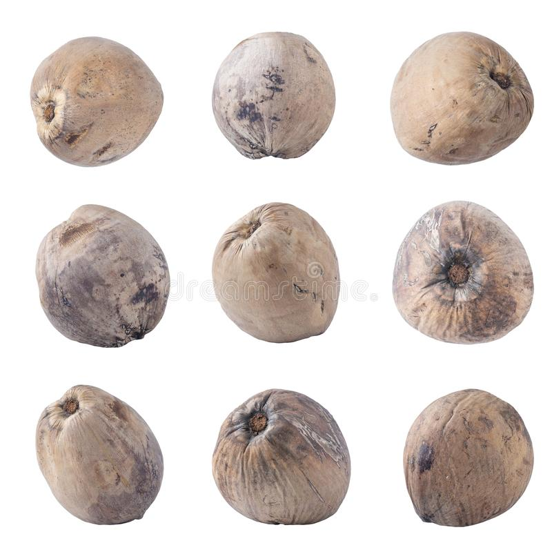 Cocos isolados no trajeto de grampeamento branco do fundo imagens de stock