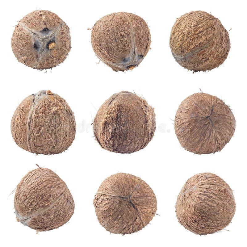 Cocos isolados no trajeto de grampeamento branco do fundo imagem de stock