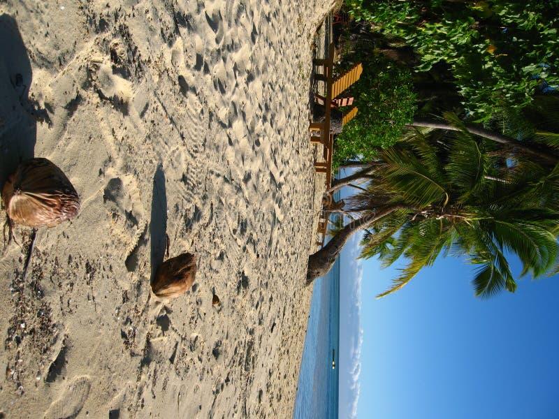 Cocos na praia tropical fotos de stock