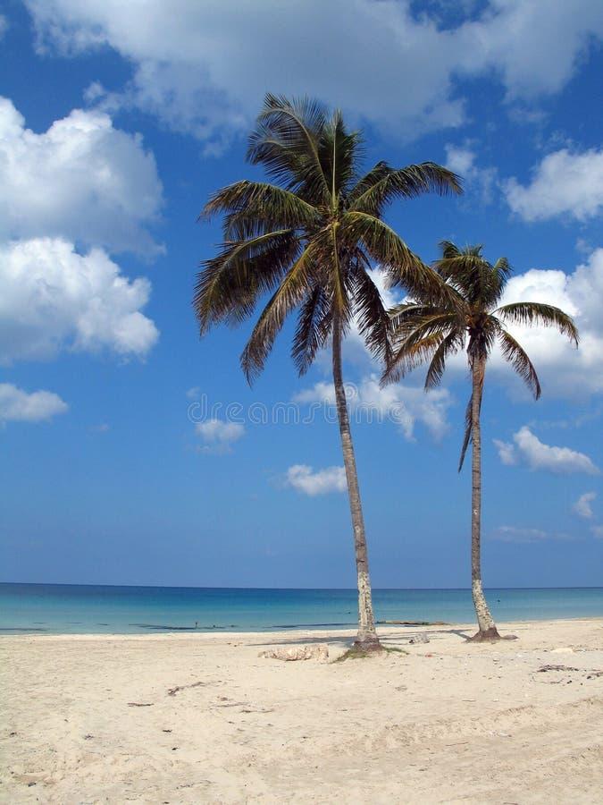 Cocos na praia tropical imagens de stock