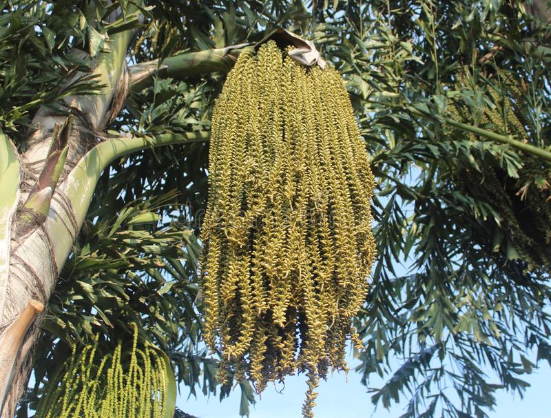 Cocos palmier et fleurs photographie stock