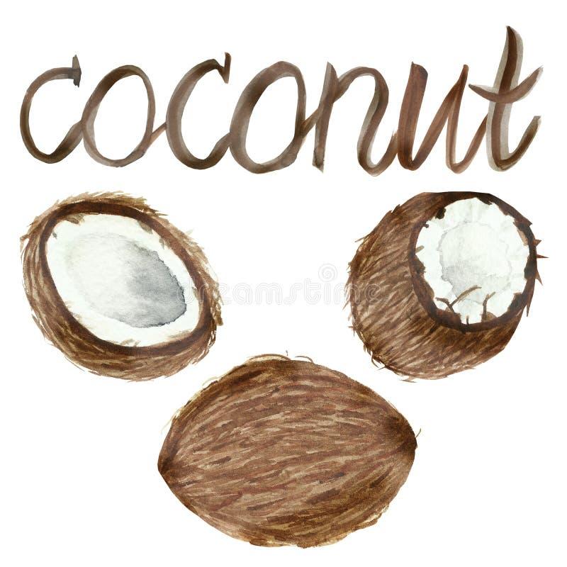 Cocos pintados à mão da aquarela, metade cortada madura, arte do alimento isolados no fundo branco e rotulação para o projeto bon ilustração royalty free