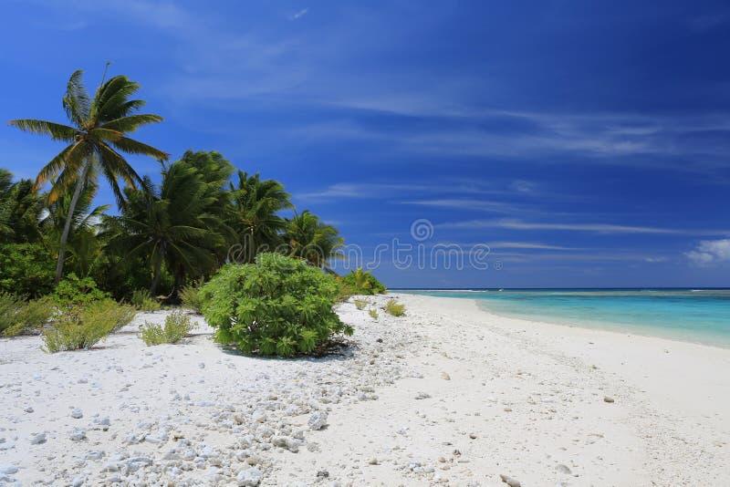 Cocos remotos prístinos Palm Beach, Isla de Navidad, Kiribati fotografía de archivo
