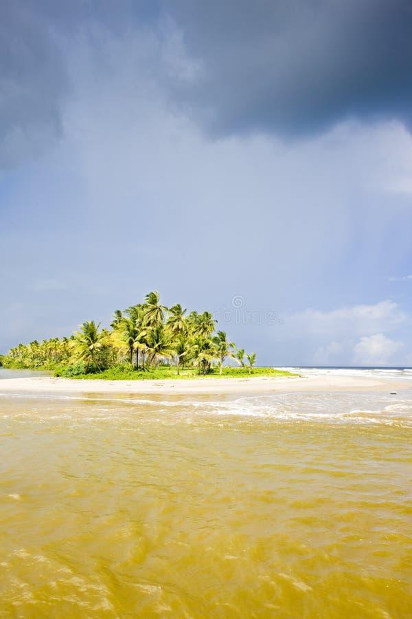 Cocos skäller, Trinidad arkivbilder