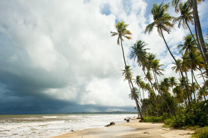 Cocos skäller, Trinidad royaltyfri bild