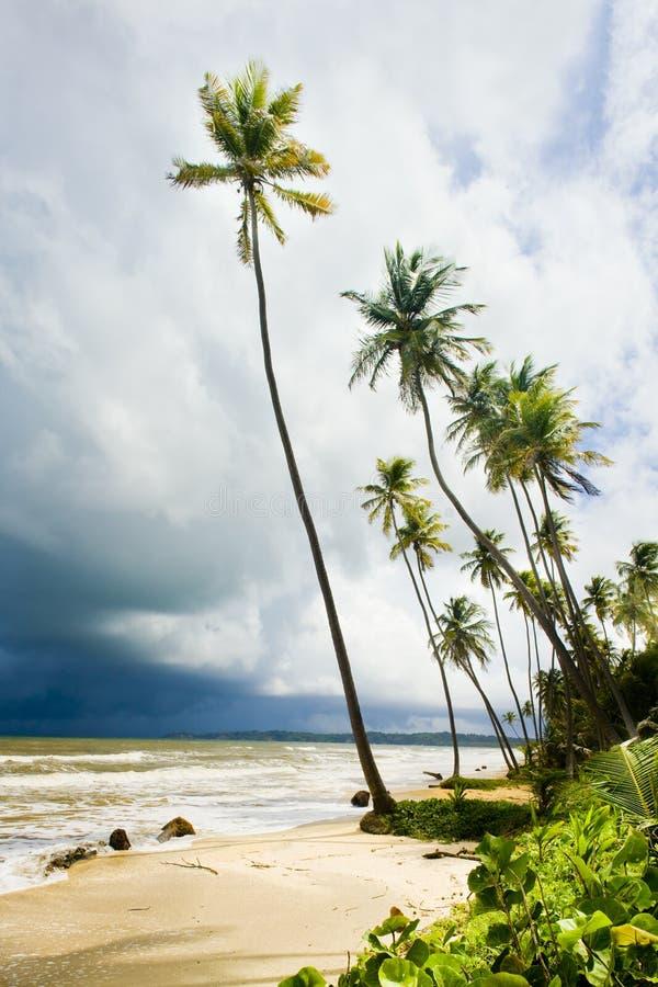 Cocos Trzymać na dystans, Trinidad zdjęcie stock