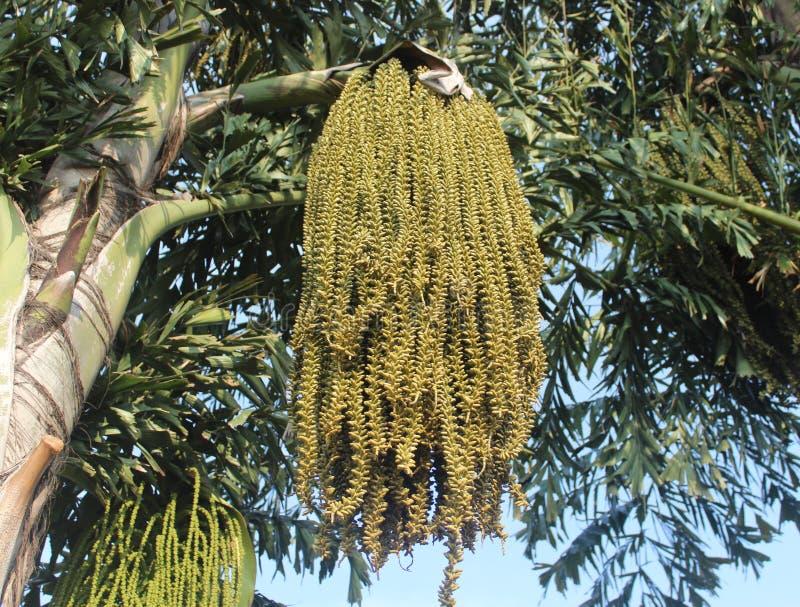 Cocospalm en bloemen stock fotografie