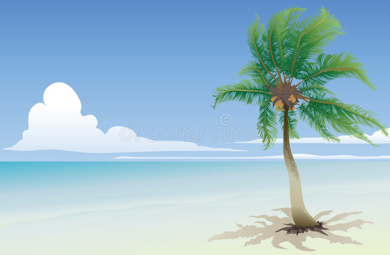 Cocotier illustration stock